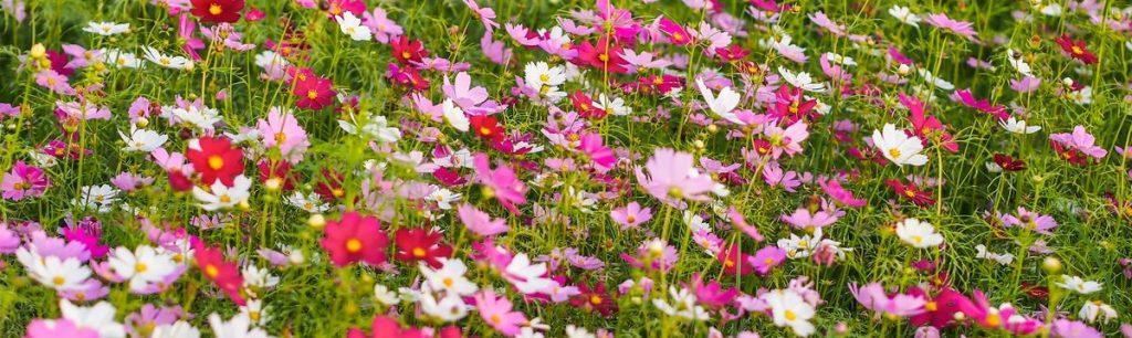 lilleline naiste triiksärk